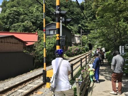 御霊神社の江ノ電とあじさい撮影スポット