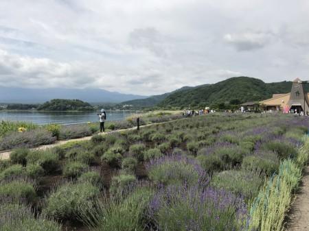 河口湖ハーブフェスティバル2018