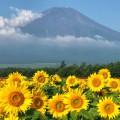 季節の花と富士山のコラボの絶景、山中湖花の都公園