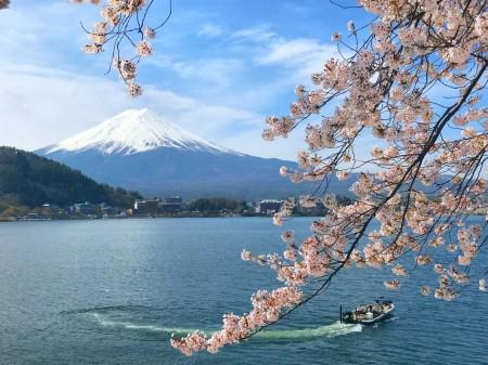 産ヶ屋崎の桜と富士山