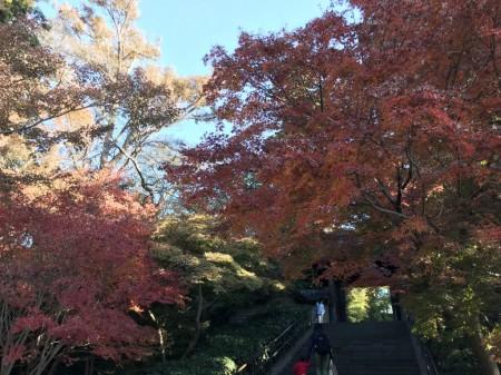 iPhone7 Plusで円覚寺の紅葉を撮影