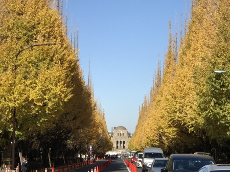 iPhone7 Plusで神宮外苑いちょう並木を撮影