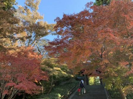 iPhone XS Maxで円覚寺の紅葉を撮影