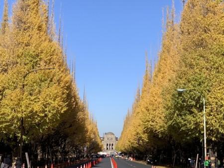 iPhone XS Maxで神宮外苑いちょう並木を撮影