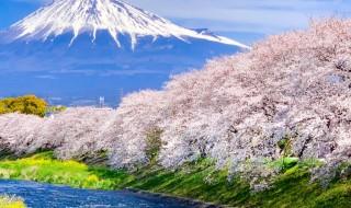 龍厳淵の桜と富士山2019