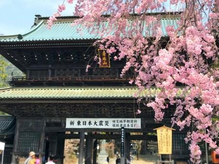 身延山久遠寺の三門と桜