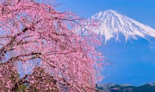 妙泉寺のしだれ桜と富士山