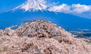 先照寺の富士山としだれ桜